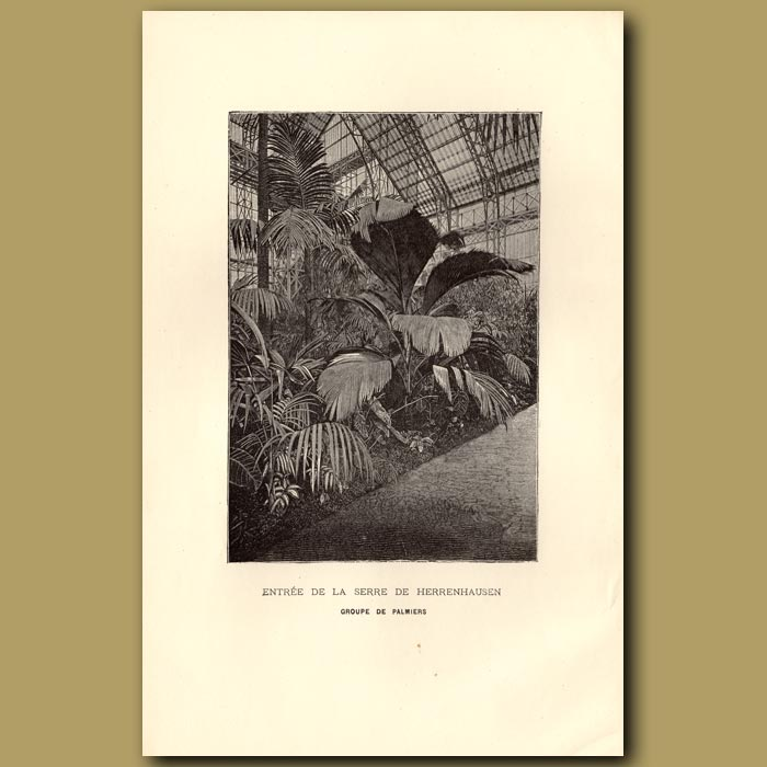Antique print. Entree De La Serre De Herrenhausen