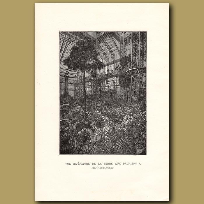 Antique print. Vue Interieure De La Serre Aux Palmiers A Herrenhausen