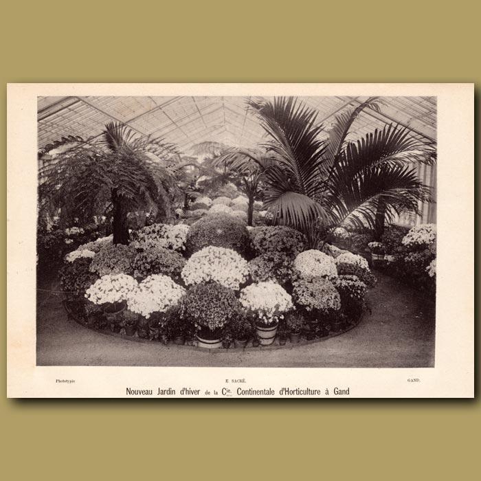 Antique print. Nouvelle Jardin D'Hiver De La Continentale D'Horticulture A Gand