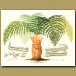 Regal Tree Fern (Double sized print)
