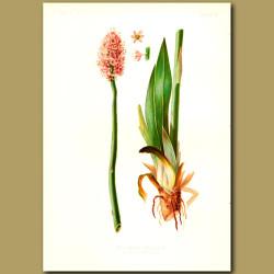 Stud Flower