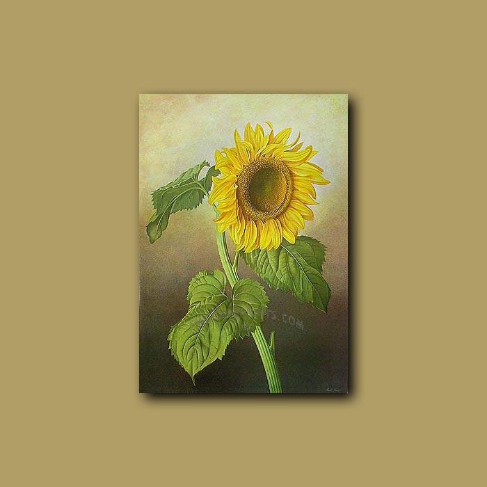Antique print. Sunflower