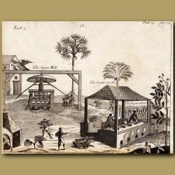 The Sugar Mill, The Sugar Works, The Sugar Canes