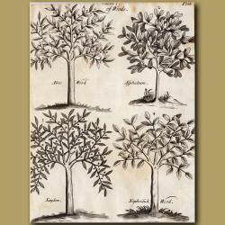 Aloes Wood, Asphaltum, Sanders And Nephritic Wood