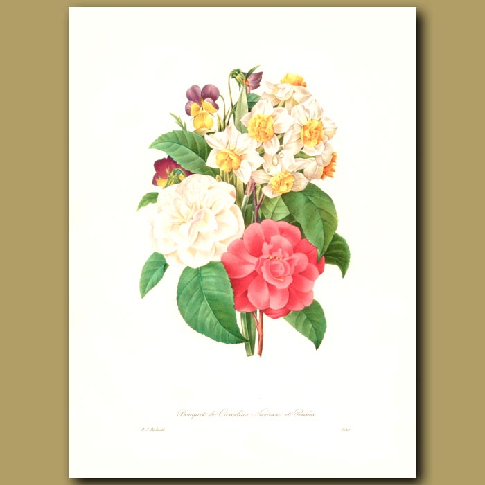 Antique print. Camellias, Narcissi and Pansies