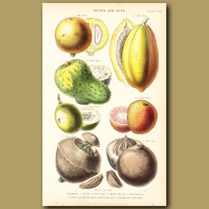 Antique print. Tropical Fruit: Mammee, Pawpaw, Soursop, Negro Peach, Granadilla, Brazil Nut