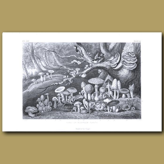 Antique print. Fungi or Mushroom Plants