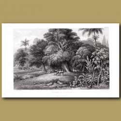 Ornamental Plants: Betel-Nut Palm, Mahogany Tree, Breadfruit Tree, Cacti