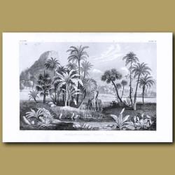 Palms: Cabbage Palm, Coconut Palm, Fan Palm, Oily Palm, Date Palm