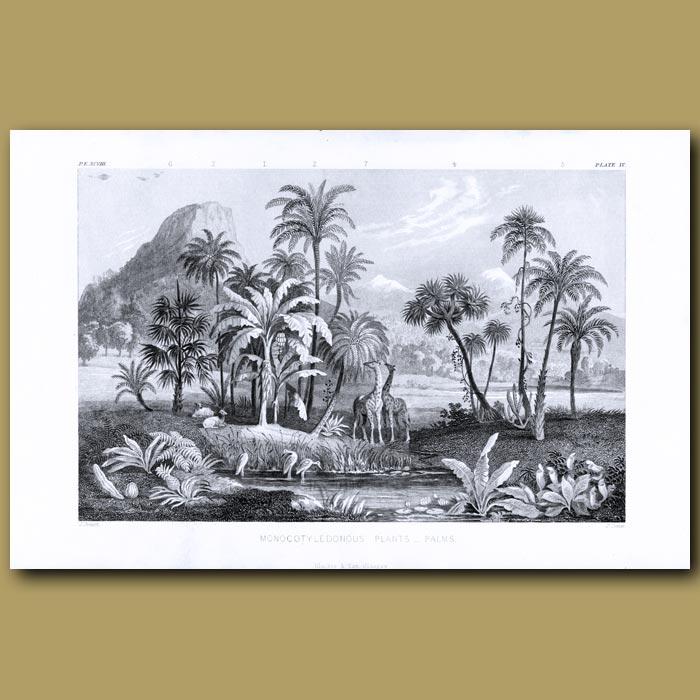 Antique print. Palms: Cabbage Palm, Coconut Palm, Fan Palm, Oily Palm, Date Palm