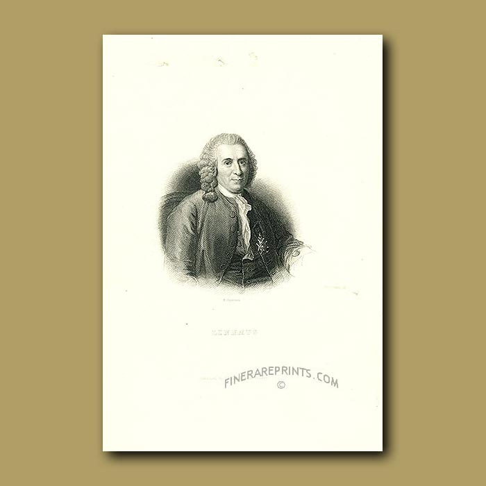 Antique print. Portrait Of Linnaeus