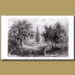 Fruit And Ornamental Trees: Cork Oak, Hemp Palm, Olive Tree, Apple Tree, Sago Palm