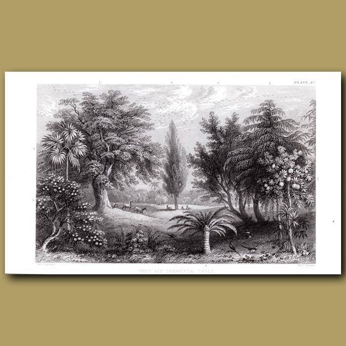 Antique print. Fruit And Ornamental Trees: Cork Oak, Hemp Palm, Olive Tree, Apple Tree, Sago Palm
