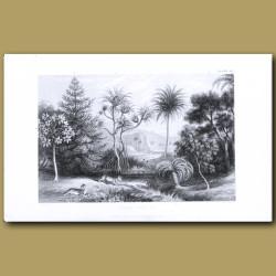 Palms And Pines: Screw Pine, Date Palm, Cacoa Tree, Pawpaw