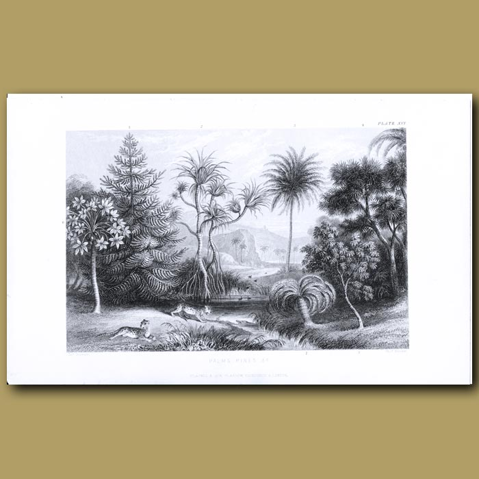 Antique print. Palms And Pines: Screw Pine, Date Palm, Cacoa Tree, Pawpaw