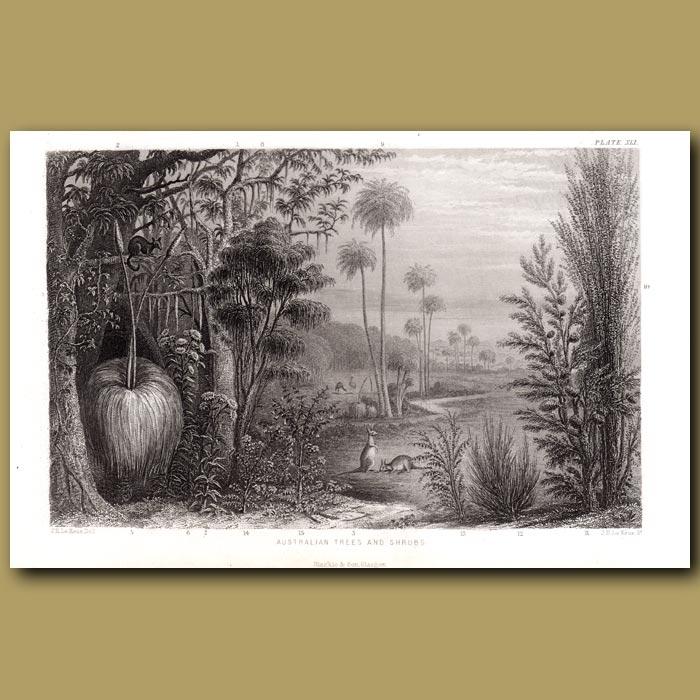 Antique print. Australian Trees And Shrubs: Gum Tree, Wattle Tree, Captain Cook's Tea Tree, Cabbage Palm