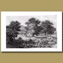 Fruit Trees: Chestnut Tree, Walnut Tree, Lemon Tree, Orange Tree