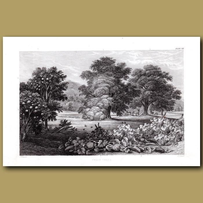 Antique print. Fruit Trees: Chestnut Tree, Walnut Tree, Lemon Tree, Orange Tree
