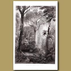 Scene In A Brazilian Rainforest