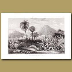Grain Plants: Maize, Rice, Millet, Wheat, Wax Palm