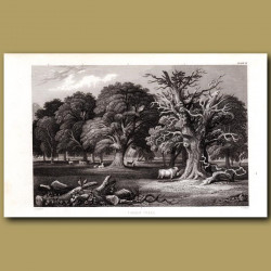 Timber Trees: Oak, Ash, Elm, Beech, Lime
