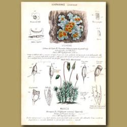 Lichene. Moss and Lichen