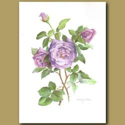Rose Sterling Silver