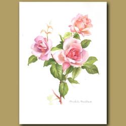 Rose Michele Meilland