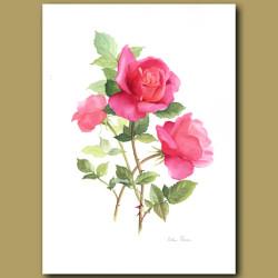 Rose Eden Rose