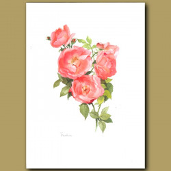 Rose Fashion