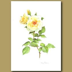 Rose Ivory Fashion