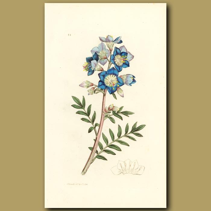 Antique print. Jacobs Ladder