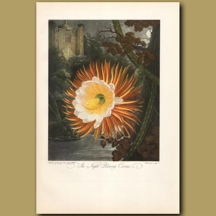 The Night Blowing Cereus: Genuine antique print for sale.