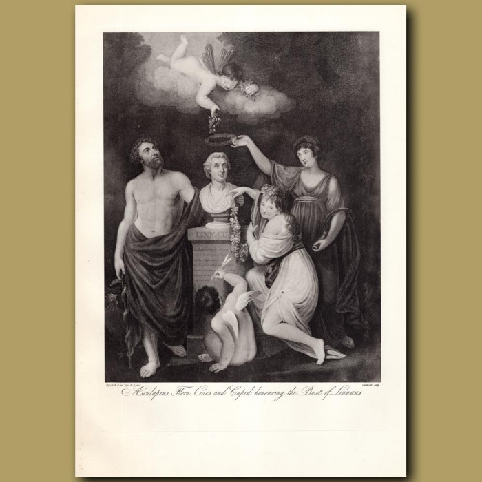 Aesculapius, Flora, Ceres and Cupid honouring the Bust of Linnaeus: Genuine antique print for sale.