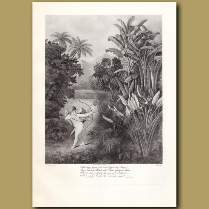 Cupid Inspiring Plants with Love: Genuine antique print for sale.