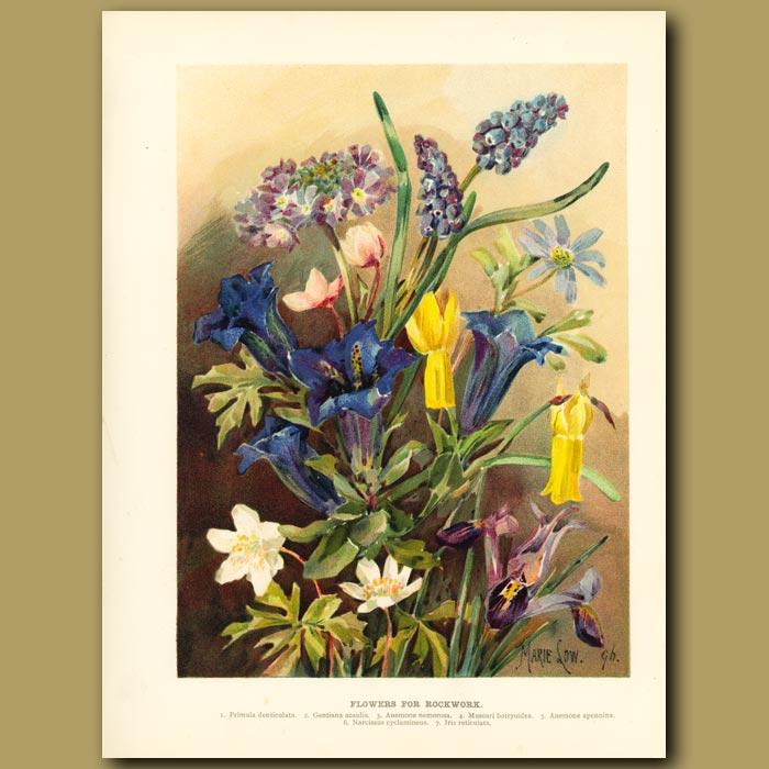 Antique print. Flowers for Rockwork