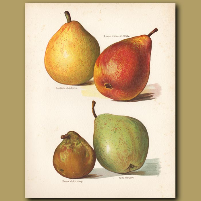 Antique print. Pears