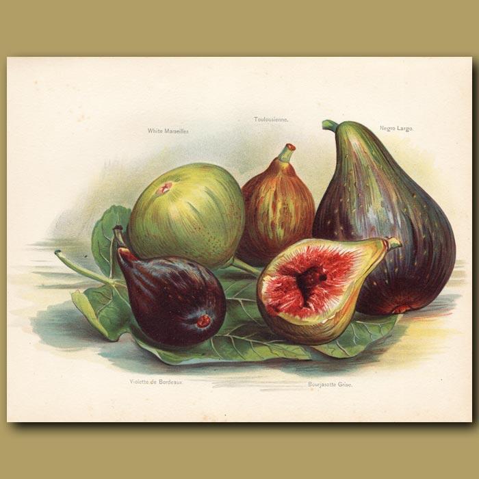 Antique print. Figs
