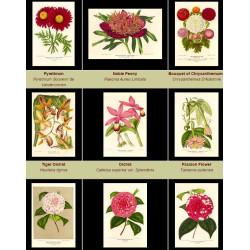 High Res Images: 38 Botanical Artworks From L'illustration Horticole Journal Special Des Serres Et Des Jardins