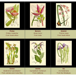 High Res Images: 60 Artworks From The Botanical Magazine by William Curtis