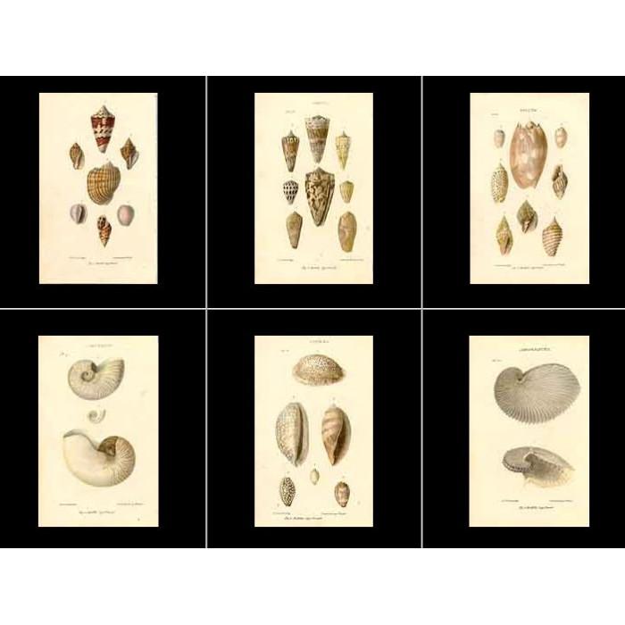 Antique print. High Res Images: 38 Seashells Artworks By John Mawe