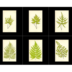 High Res Images: 40 Ferns By Edward Lowe