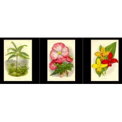 High Res Images: 27 Botanical Artworks From L'illustration Horticole Journal Special Des Serres Et Des Jardins