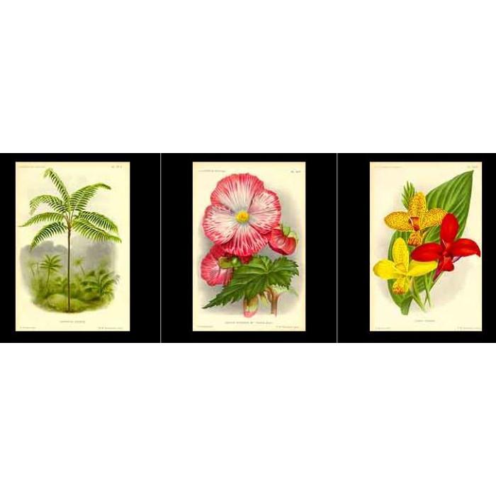 Antique print. High Res Images: 27 Botanical Artworks From L'illustration Horticole Journal Special Des Serres Et Des Jardins