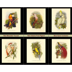 High Res Images: 16 Tropical Birds By John Gould