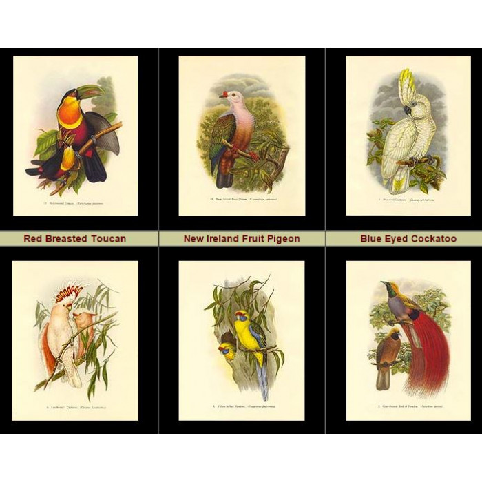 Antique print. High Res Images: 16 Tropical Birds By John Gould