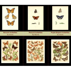 High Res Images: 26 Butterfly Antique Prints