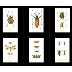 High Res Images: 39 Insect Antique Prints By Charles Orbigny
