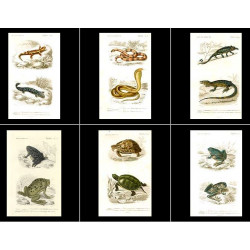 High Res Images: 17 Reptile Antique Prints By Charles Orbigny