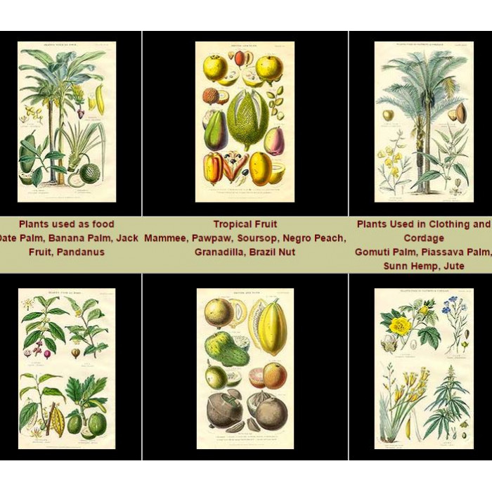 Antique print. High Res Images: 41 Useful Plant Antique Prints By William Rhind